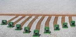 Área de algodão no Brasil deve crescer 8% na safra 2014/2015