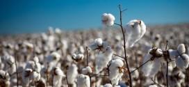 Importação Chinesa de algodão em outubro cai ao menor nível em 5 anos